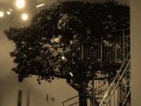 Jüdisches Museum - Granatapfelbaum